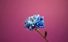 High-resolution desktop wallpaper A Lovely Day! by abdullah993