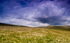 High-resolution desktop wallpaper Daisy Field by paulevermore