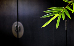 High-resolution desktop wallpaper Bamboo by Q.D