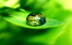 High-resolution desktop wallpaper World on Green Leaf by dolby