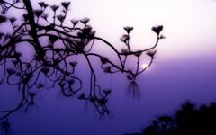 High-resolution desktop wallpaper Purple Haze by prateekpk