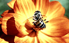High-resolution desktop wallpaper The Amazing Macro-Life by Santiago Sak Castellanos