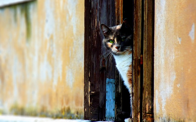 High-resolution desktop wallpaper Venetian Cat by saturos