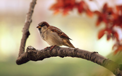 High-resolution desktop wallpaper Sparrow Resting by PerfectHue
