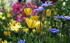 High-resolution desktop wallpaper Vail Flowers by joshuarjs