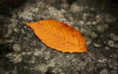 High-resolution desktop wallpaper Fallen Leaf by emats