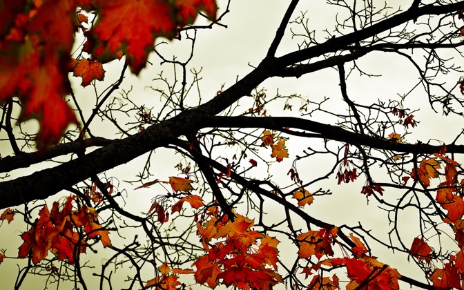 High-resolution desktop wallpaper Colours of Fall by satbir