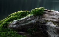 High-resolution desktop wallpaper Moss by tommyhev