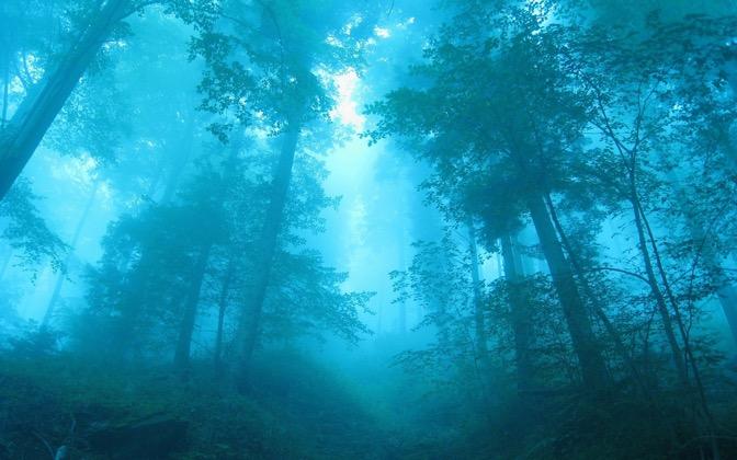 High-resolution desktop wallpaper Blue Forest by Keman