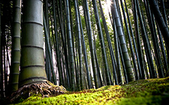 High-resolution desktop wallpaper Bamboo by Philippe Clairo