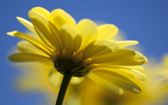 High-resolution desktop wallpaper Yellow One by James1984