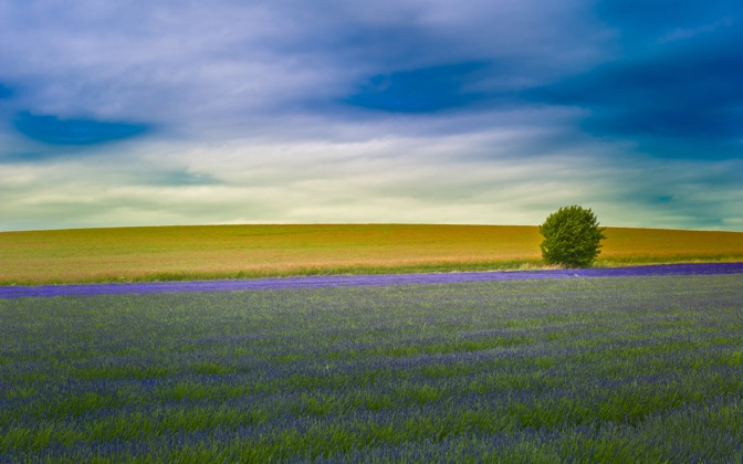 High-resolution desktop wallpaper Hitchin Lavender by kenchie