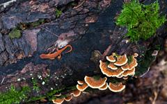 High-resolution desktop wallpaper Earthen Lizard by mxp143
