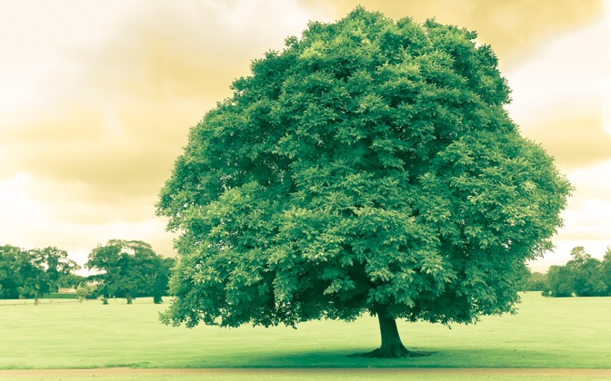 High-resolution desktop wallpaper Green Tree in Ireland by Winter Sorbeck