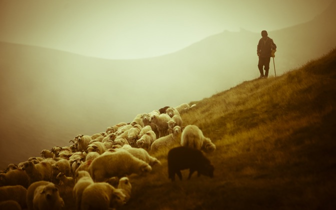 High-resolution desktop wallpaper Shepherd in Romania by stabmixer