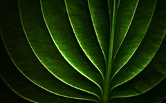 High-resolution desktop wallpaper Neon Leaf by Adrian