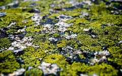 High-resolution desktop wallpaper Specs of Green by RJFos