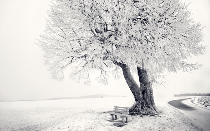 High-resolution desktop wallpaper Frozen Tree by fotografieloft