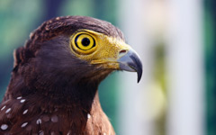High-resolution desktop wallpaper Eagle's Stare by cookzkie