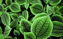 High-resolution desktop wallpaper Green World by Emmanuel Iarussi