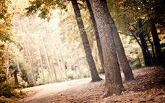 High-resolution desktop wallpaper Forest by fotografieloft