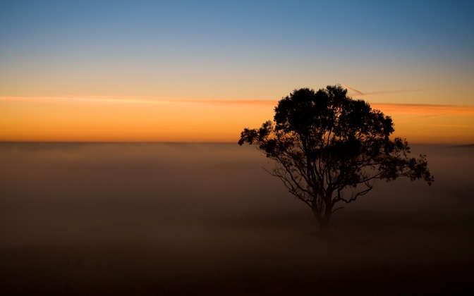 High-resolution desktop wallpaper Tree in the Mist by Sean Hanlon