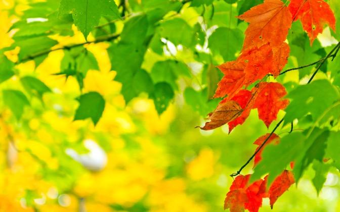 High-resolution desktop wallpaper Autumn Bloom by jag64551