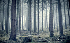 High-resolution desktop wallpaper Morning Mist by fotografieloft