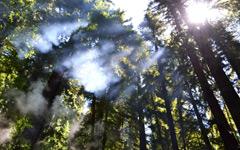 High-resolution desktop wallpaper Breaking through the Trees by Matt Hanson