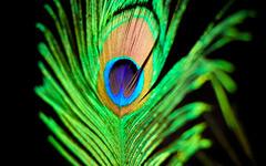 High-resolution desktop wallpaper An Emerald Princess by Leslley Scotte