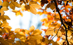 High-resolution desktop wallpaper Yellow Autumn by chikyb
