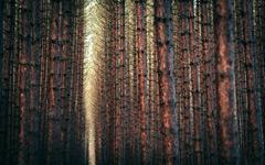 High-resolution desktop wallpaper Sous-Bois by alexstrohl