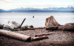 High-resolution desktop wallpaper Seattle Log by meeshel