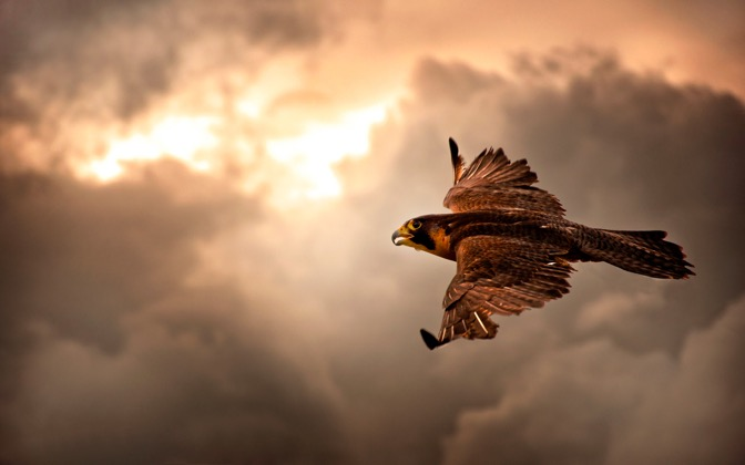 High-resolution desktop wallpaper Take Flight by Michael kaldani