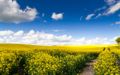 High-resolution desktop wallpaper The Golden Fields of May by Luziferian