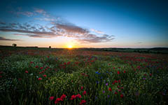 High-resolution desktop wallpaper Sunrise over the Poppy Field by kenchie