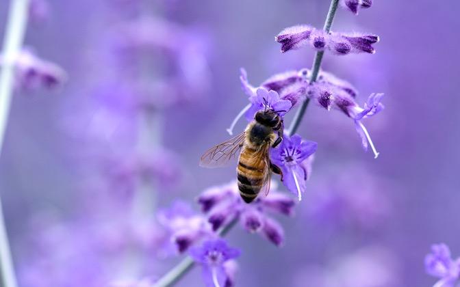 High-resolution desktop wallpaper Pollinate by clark28