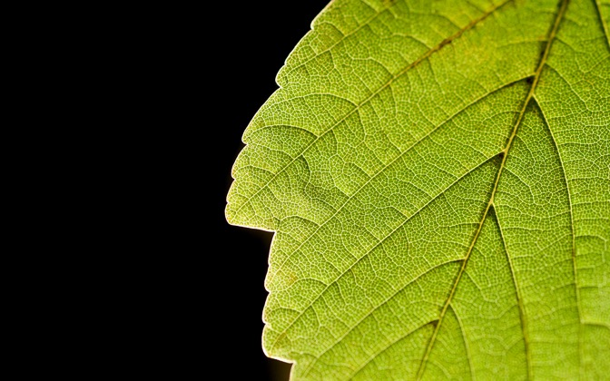 High-resolution desktop wallpaper Leaf Life by kopfwiesieb
