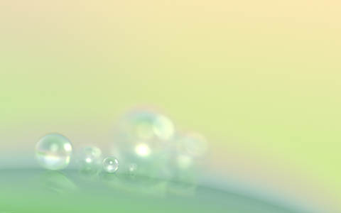 High-resolution desktop wallpaper Morning Dewdrops by Matthias