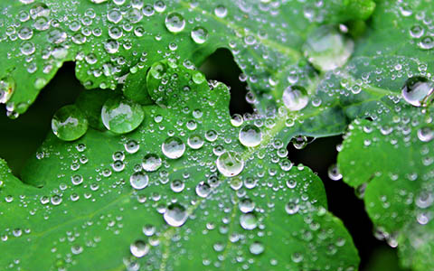 High-resolution desktop wallpaper Water Droplets by elrecke