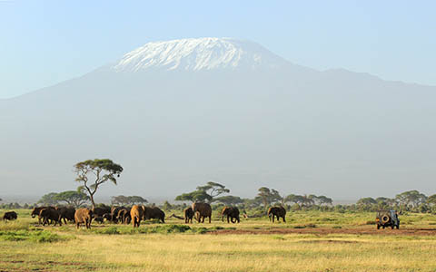 High-resolution desktop wallpaper Unforgettable Safari by idt75