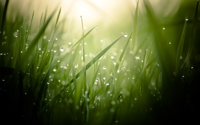 High-resolution desktop wallpaper Morning Dew by KevinDurant