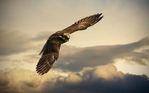 High-resolution desktop wallpaper Angry Bird by Robin Kamp