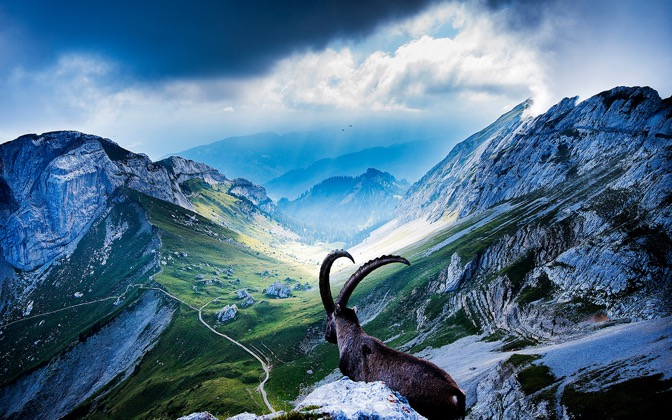 High-resolution desktop wallpaper Goat at Mount Pilatus by Robin Kamp