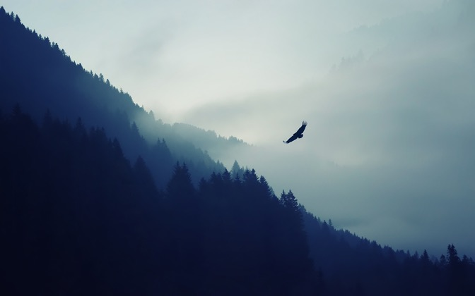 High-resolution desktop wallpaper The Eagle by Dominic Kamp