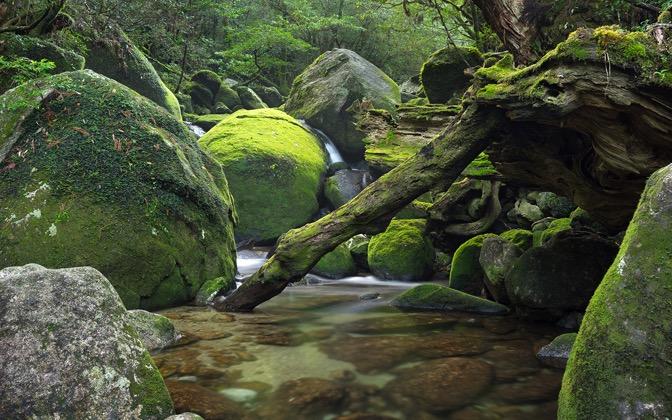 1024x640 stone lichen 1152x720 - photo #14