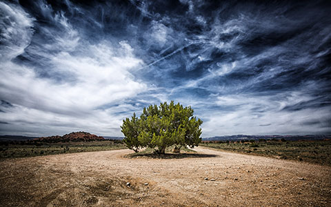 High-resolution desktop wallpaper One Juniper Tree by Philippe Clairo