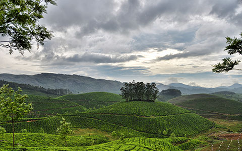 High-resolution desktop wallpaper Munnar Tea Gardens by iamAbhishek