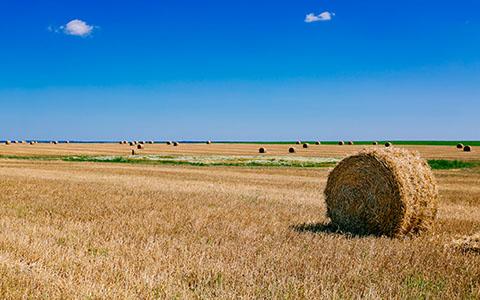 High-resolution desktop wallpaper Summer Fields by andrewsparrow