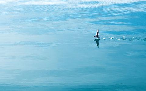 High-resolution desktop wallpaper Running on Water by Gustav Harborn